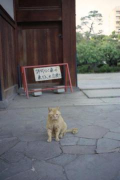 20120509r4msakaineko