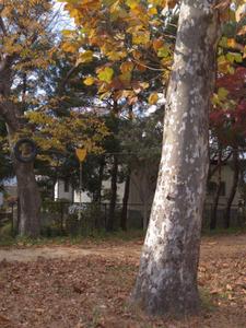 Asakadaini