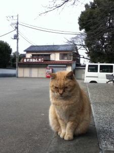 Kawagoeneko